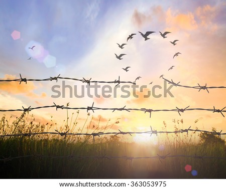 Silhouette many birds flying in shape of heart and broken barbed wire on sunset background. Freedom, Happy Valentine's Day, Love, Liberty, Environment, Ecology, Hope, Team, Unity, Faith, Trust concept - stock photo