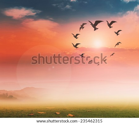 Silhouette many birds flying in the shape of heart against a beautiful evening sunset or morning sunrise sky and sun in the background. Environment, Ecology concept. - stock photo