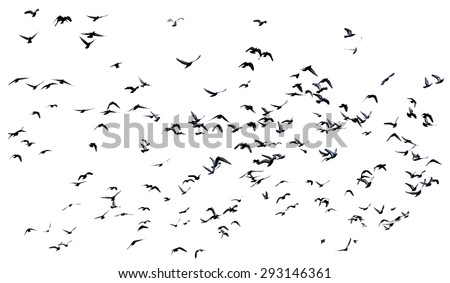 silhouette many pigeons flying in the air isolated on white background - stock photo