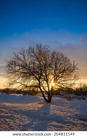Silhouette of a bare tree in a snowy sunset - stock photo