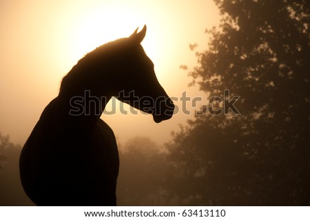 Silhouette of a beautiful Arabian horse against sun shining through heavy fog, in sepia tone - stock photo
