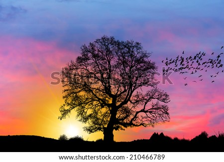 Silhouette of a big mighty oak against sunset - stock photo