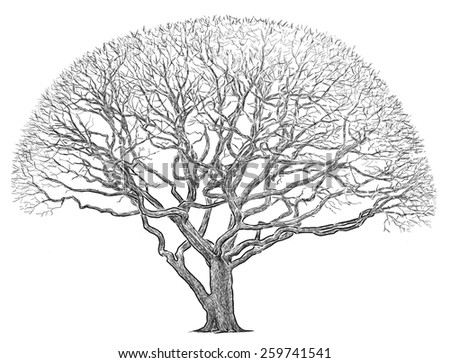 silhouette of a big tree