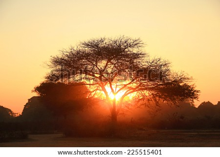 Silhouette of a big tree at sunset