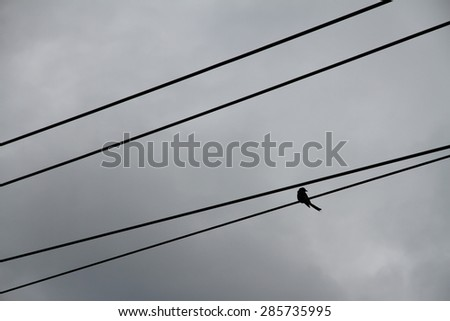 Silhouette of a bird on a telephone wire against the cloudy sky. - stock photo