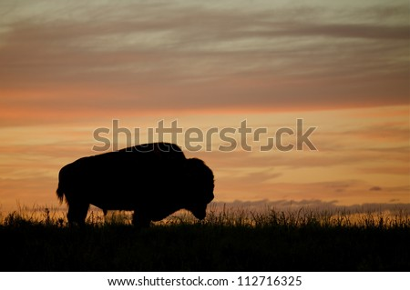 Silhouette of a Bison / Buffalo against a colorful sunset, Montana; prairie wildlife - stock photo