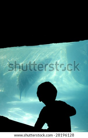 Silhouette of a boy looking into an aquarium.