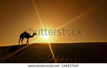 Silhouette of a camel walking alone in the Dubai desert - stock photo