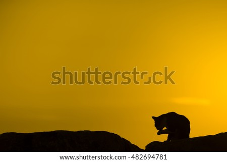 Silhouette of a cat on sunset cat is licking its hand.
