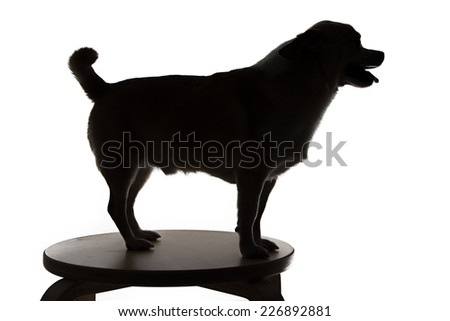 Silhouette of a chihuahua with open mouth on white background - stock photo