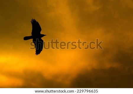 silhouette of a crow flying against a dramatic sky - stock photo