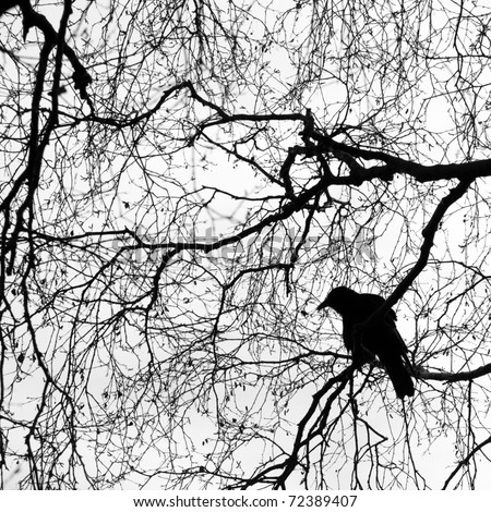 Silhouette of a crow on a tree - stock photo