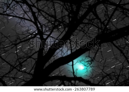 Silhouette of a defocused tree with sharp stars. Comet is taken through my telescope.  - stock photo