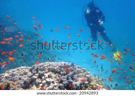 Silhouette of a diver and coral fishes in the Red sea - stock photo