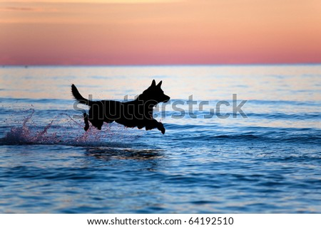 Silhouette of a dog running on water against horizon - stock photo
