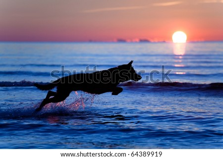 Silhouette of a dog running on water against sunset - stock photo