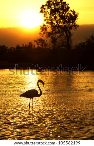 Silhouette of a flamingo wading in water at sunset
