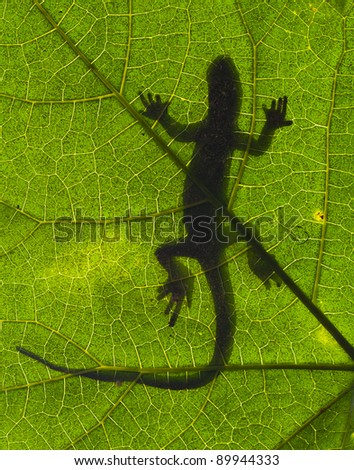 Silhouette of a gecko lizard on a green tropical leaf - stock photo
