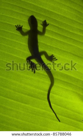 Silhouette of a gecko lizard on a green tropical leaf viewed from underneath in the sunshine. - stock photo
