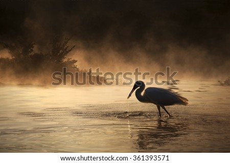 Silhouette of a great blue heron with a small fish in its mouth and a dramatic background.