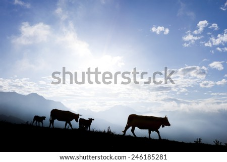 Silhouette of a herd of cows at the top of the Pyrenees Mountains in France (Col d'Azet) during summer with a very wonderful blue sky - stock photo