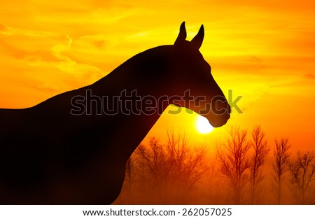 Silhouette of a horse on a background of orange sky at sunset - stock photo