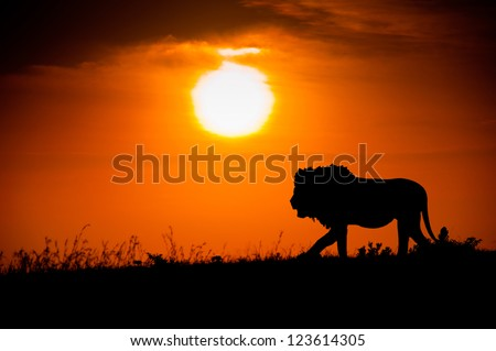 Silhouette of a lion against the African sunset - stock photo