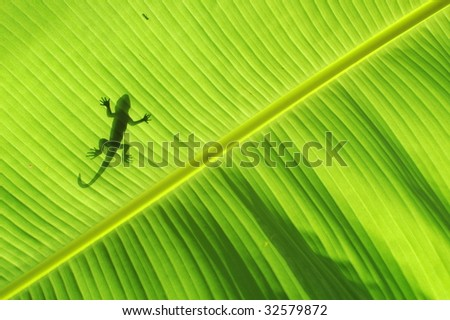 Silhouette of a lizard - stock photo