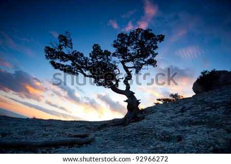 silhouette of a lone tree Zen in the high mountains at sunset