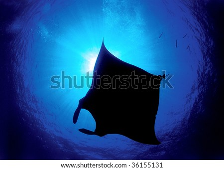 Silhouette of a manta - stock photo