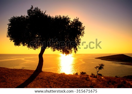 Silhouette of a olive tree with sunset over the sea in a background - stock photo