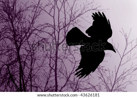 Silhouette of a raven in flight - stock photo
