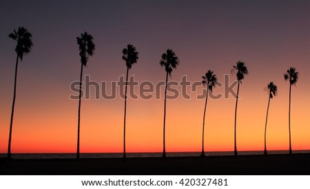 Silhouette Of A Row Palm Trees At Sunset The Beach