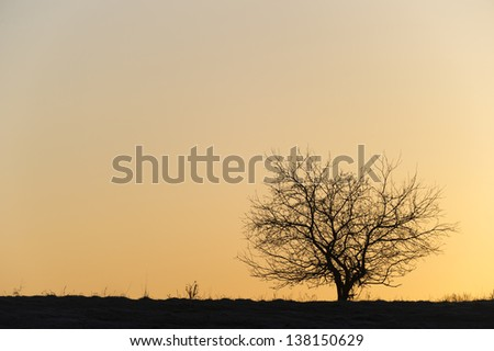 Silhouette of a single barren tree at sunset. - stock photo