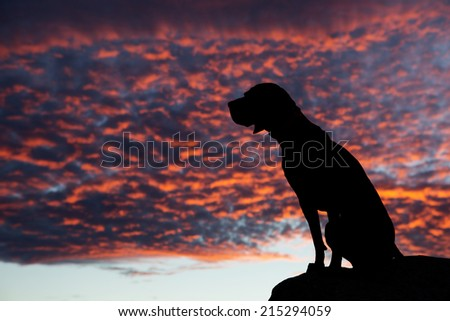 silhouette of a sitting dog with colorful sunset  lit clouds in the background - stock photo