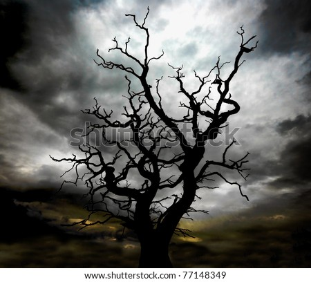 silhouette of  a skeleton dead tree with a very moody, stormy sky beyond - stock photo