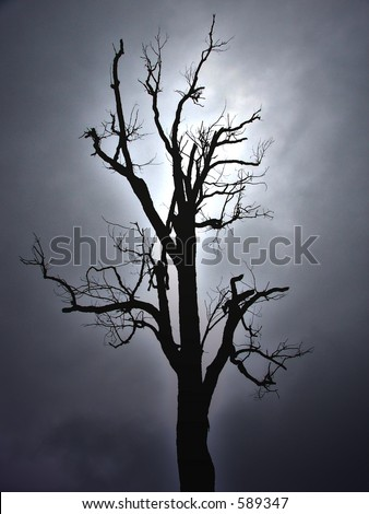 Silhouette of a tree - stock photo