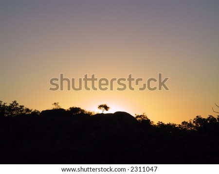 Silhouette of a tree in an African sunset (Namibia) - stock photo