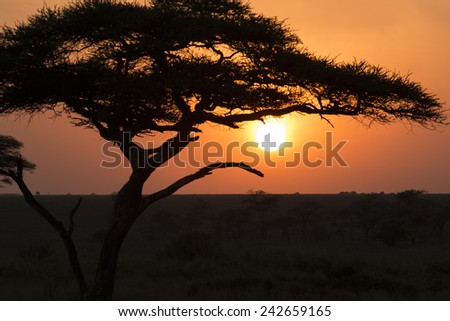 Silhouette of a tree in sunrise - stock photo