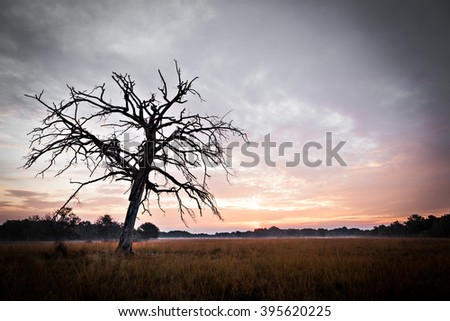 Silhouette of a tree in the early morning.