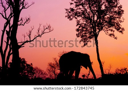 silhouette of african elephant against orange dusk dawnwith tree