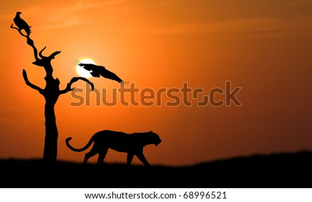 silhouette of african leopard against orange dusk dawn sun with flying vulture - stock photo
