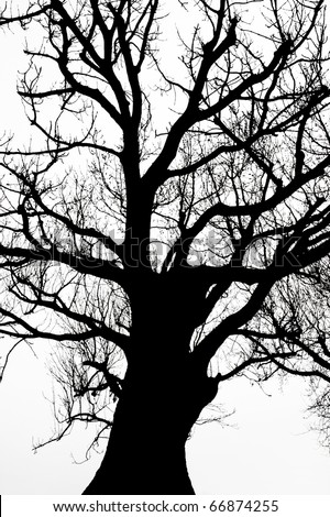 silhouette of an ancient tree in black and white - stock photo