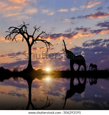 Silhouette of an elephant with a reflection on the water with a cub against the evening sky - stock photo