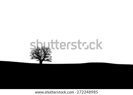 Silhouette of an old oak tree on the horizon - black and white - stock photo