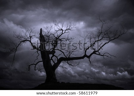 Silhouette of bare tree against blue moody sky - stock photo