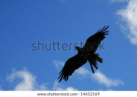 silhouette of bird of prey against blue sky