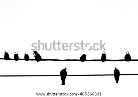 Silhouette of Bird on the electric wire cable on white background - stock photo