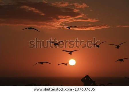 silhouette of birds in the evening sun - stock photo