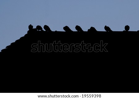 Silhouette of Birds on a Rooftop at Sunset